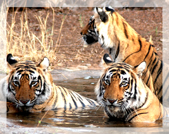 places to visit in jim corbett, jim corbett tour packages,